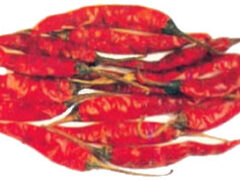 Characteristic details of the chilli varieties Used In Oleoresin extraction Experiment
